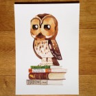 Wise Owl -- Birds & Books A4 Print