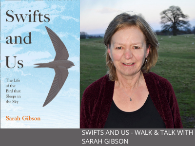 Swifts and Us – Walk & Talk with Sarah Gibson